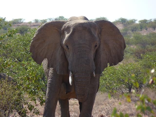 Mamma Afrika