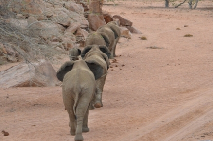 Elephants in the riverbed