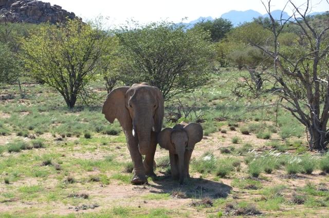 Elephant Mamma Afrika and calf Madiba