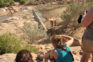 Volunteers taking an elephant shot