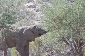 An elephant eating