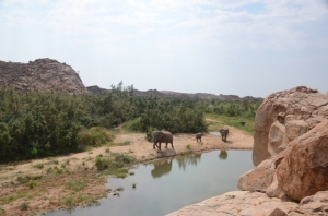 Elephants approaching a waterpoint