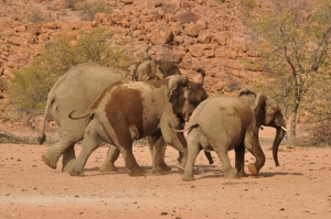 Elephants racing