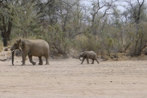 An elephant and calf