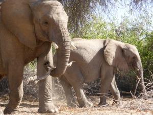 An Elephant holding a stick