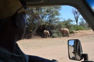 Elephants in shade