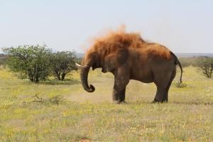 Elephant Cheeky
