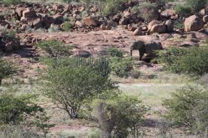 Elephant in rocks