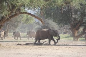 An elephant breaking a branch