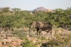 Elephant standing in the shade