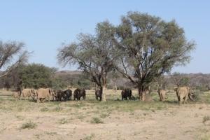 Elephants under a shade