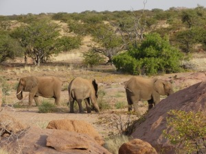 Elephants standing