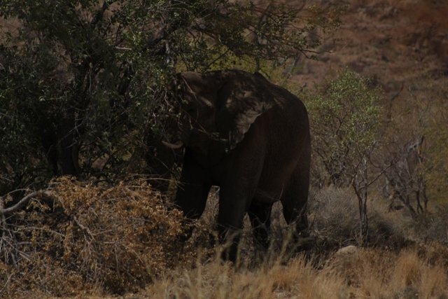 Elephant in the shade.jpg