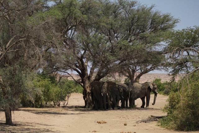 Elephants underneath a tree