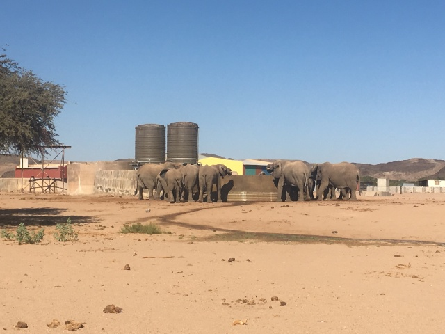 Elephants drinking at a water point (1)
